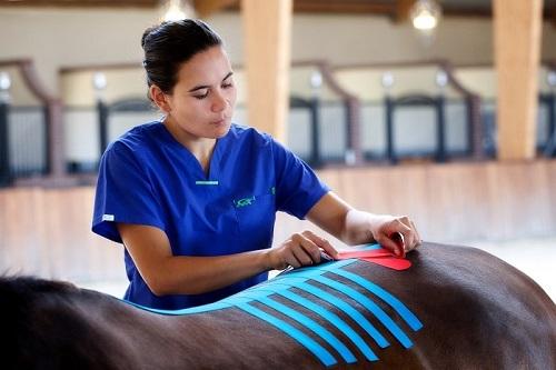 medical-taping-paard